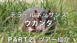 3.骨のある、スマートなNGO テラ・ルネッサンスの栗田佳典さんのこれまで