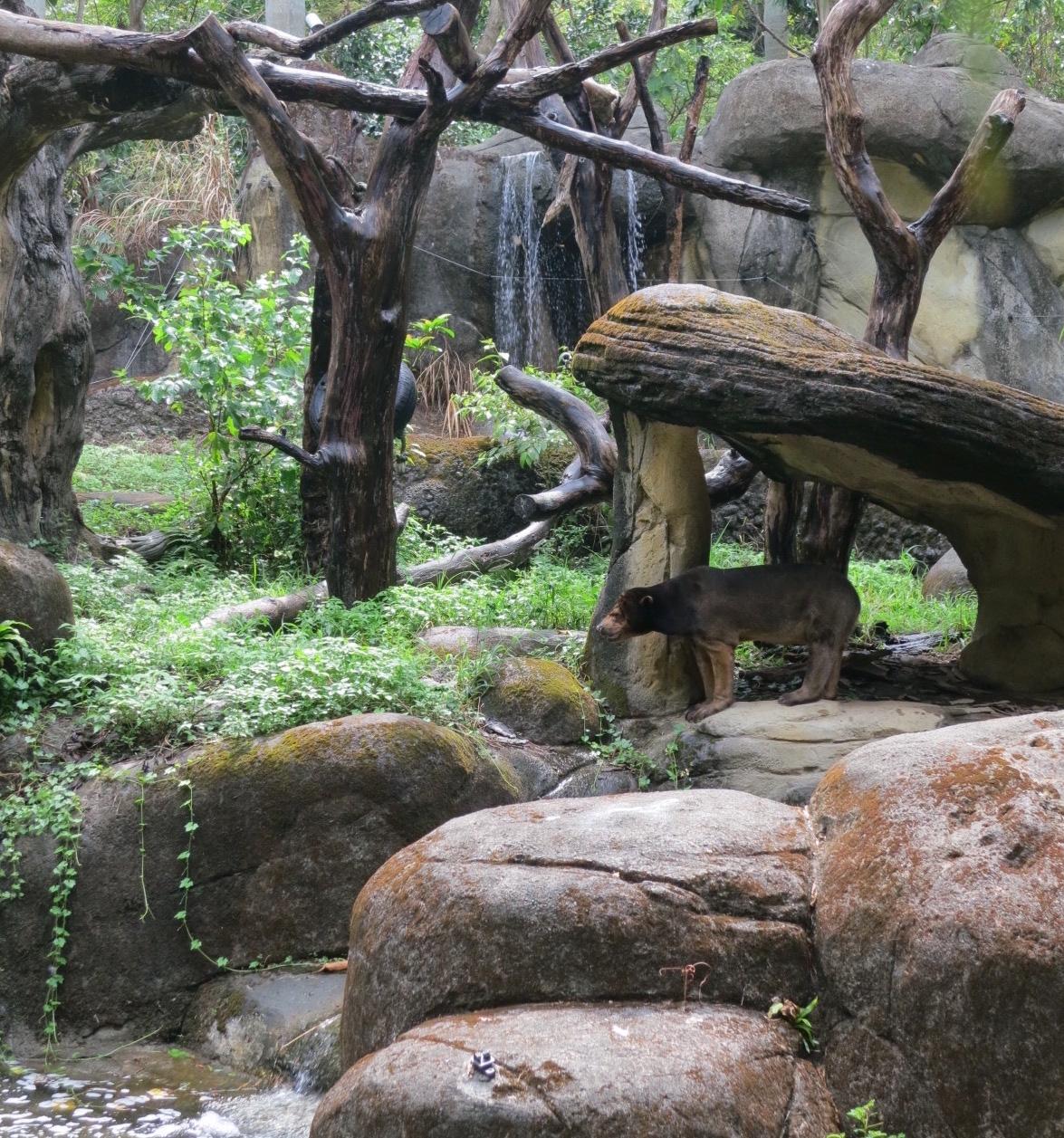 taipei_zoo_panda